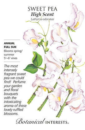 Sweet Pea High Scent Seeds