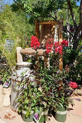 Red Rooster Crape Myrtle 2gal