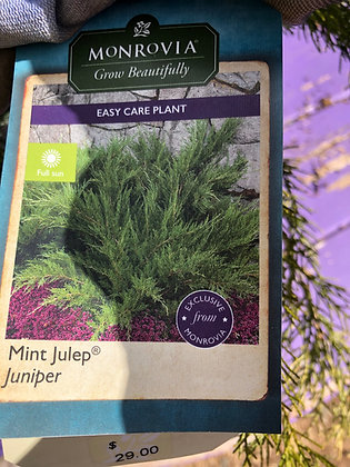 Juniper 2gal Mint Julep