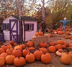 pumpkin 4_edited.jpg