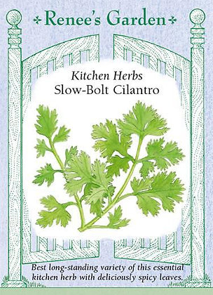Cilantro Slow-Bolt Seeds