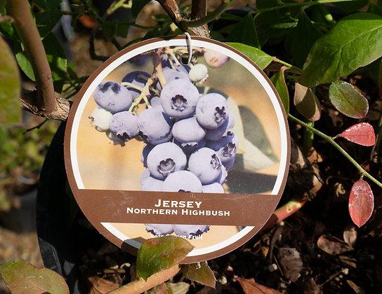 Blueberry 2gal Jersey