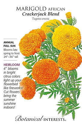Marigold African Crackerjack Seeds