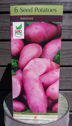 Amarosa 6ct. Seed Potatoes