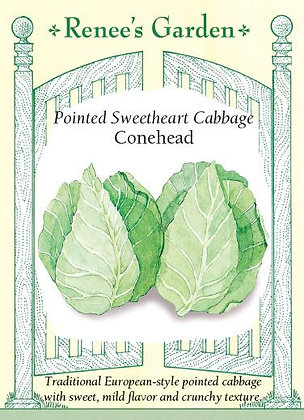 Cabbage Conehead Seeds