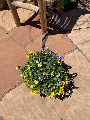 Hanging Basket-Violas Yellow & Light Purple