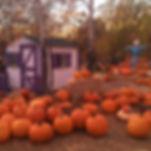 flagstaff pumpkin patch