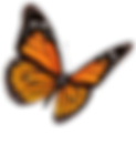 Flying-Butterflies-PNG-Transparent-Image