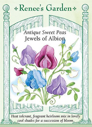 Sweet Pea Jewels of Albion Seeds