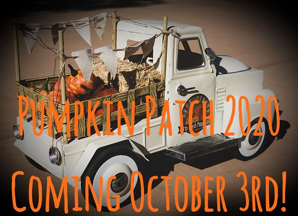 pumpkin patch annoucement.jpg