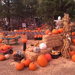 pumpkinbillboard1.jpg