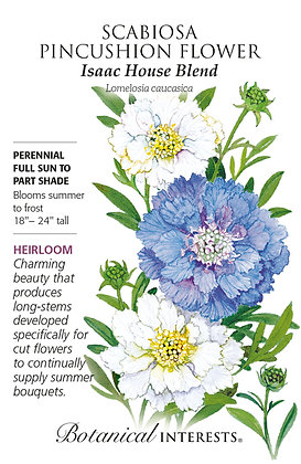 Scabiosa Isaac House Seeds