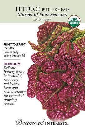 Lettuce Butterhead Marvel of Four Seeds