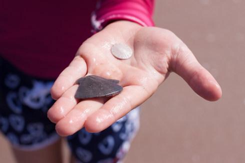 Cueillette de dollars des sables