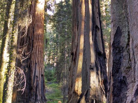 Yosemite Expansion!