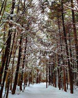 Winter woods wandering _)