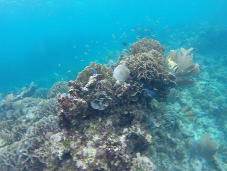 Do Sponges Eat Coral Mucus? A Dissemination