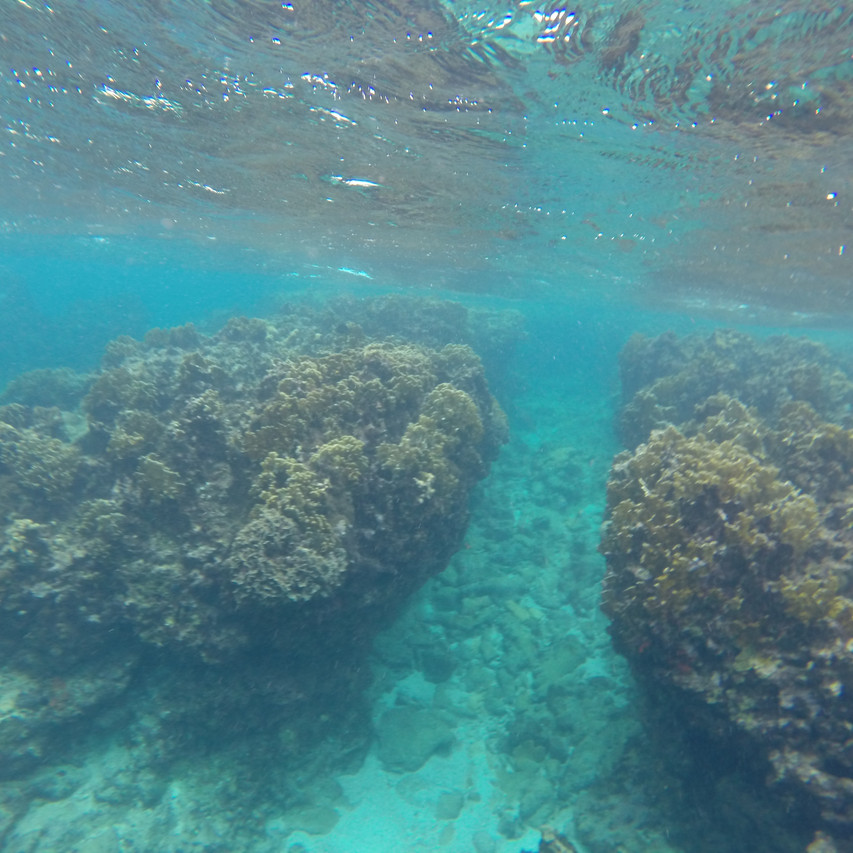 Surge-and-Scour Reef