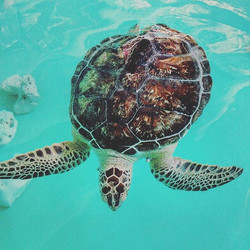 This place is the best 😍🐢 #savetheturtles