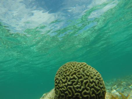 Coral InterVANtion