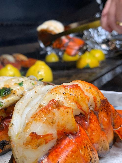 Live Boston Lobster