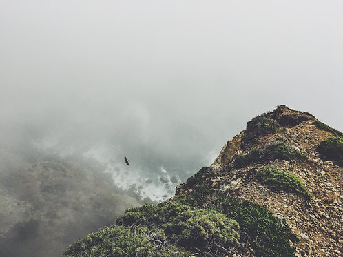 Llibre: La actitud salvaje