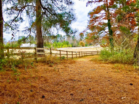 A Week At Wesleyan - Special Campus Landscapes Photo Recap Dec. 10-14