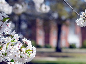Visit Macon & Wesleyan College Present the Macon Bloom Cam for the Cherry Blossom Festival