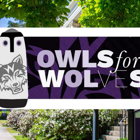Meet the Meeting Owl
