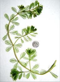 EWM MAPMS plant-chart2.jpg