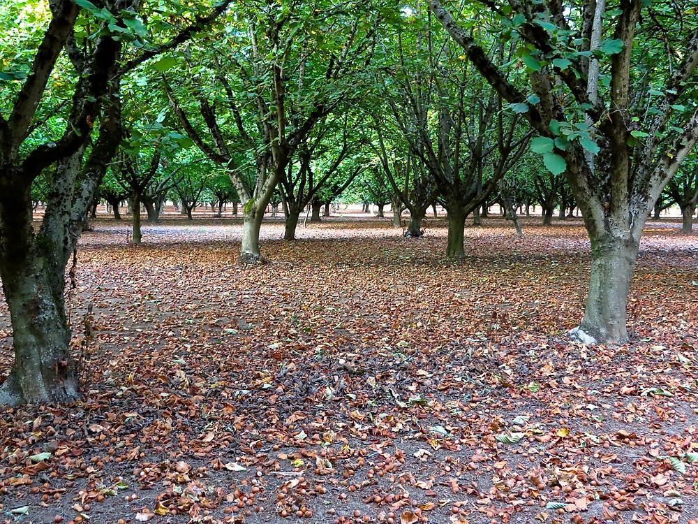 Orchard Floor