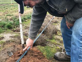Successful Hazelnut Grower Champions Drip Irrigation