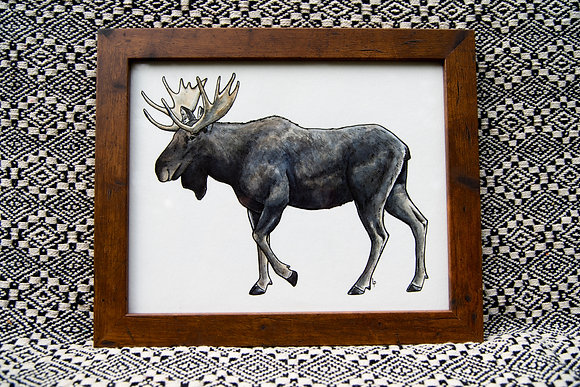 Bull Moose - Original Watercolour
