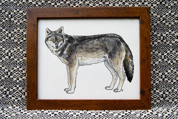 Grey Wolf - Original Watercolour