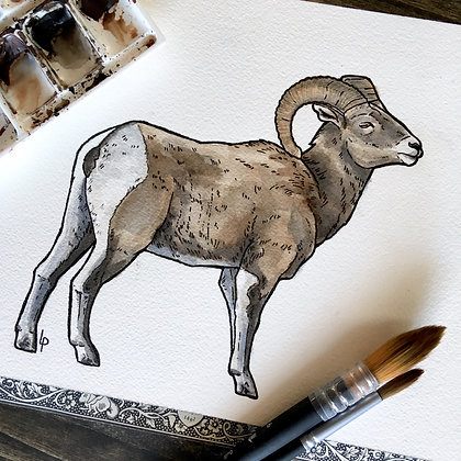 Bighorn Sheep Ram - Original Watercolour