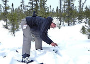 collecting caribou poo for research