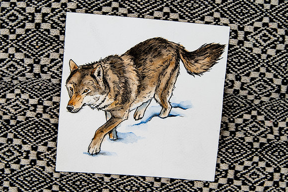 Small Wolf Watercolour