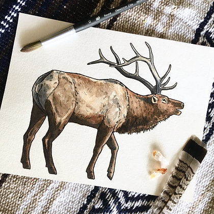 Bull Elk - Original Watercolour