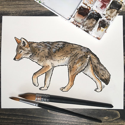 Coyote - Original Watercolour