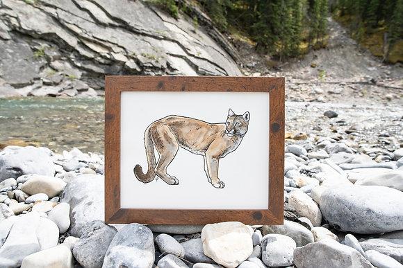 Cougar - Original Watercolour