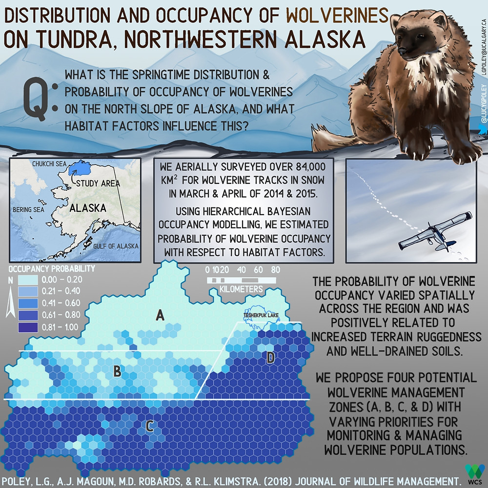 My first graphical abstract - wolverines in Alasksa