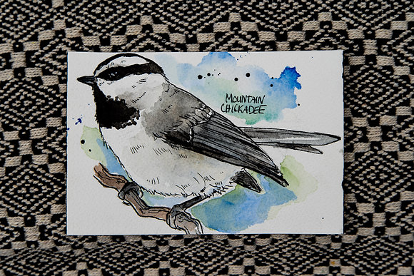 Mountain Chickadee Watercolour