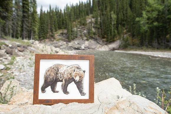 Grizzly Bear - Original Watercolour