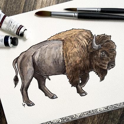 Plains Bison - Original Watercolour