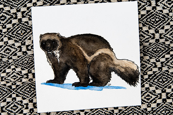 Small Wolverine Watercolour