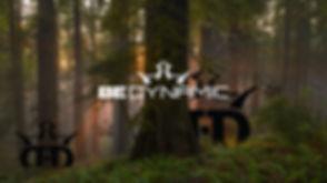 Redwoods-Be-Dynamic-Desktop-Wallpaper.jpg