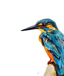 European Blue Kingfisher