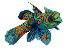 Original Watercolor AVAILABLE