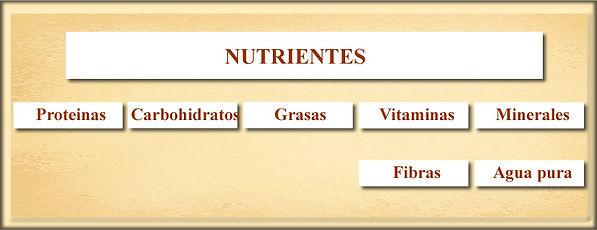 Nutrientes 1.jpg