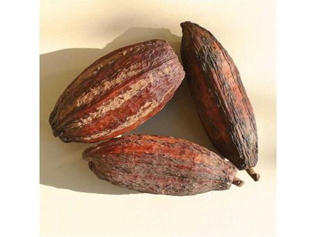 Papier fabriqué à base de cabosses de cacao